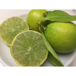 Limetta o Lime Biologico