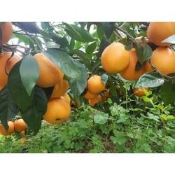 Cassetta arance biologiche da 10 KG