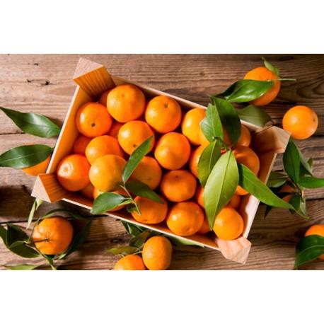 Mandarino Tardivo di Ciaculli BIO cassetta da Kg.10
