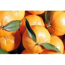 Mandarino Tardivo di Ciaculli BIO cassetta da Kg.16