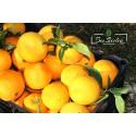 Oranges Biologiques